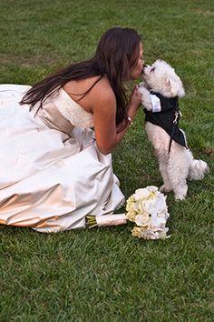 Laguna Beach wedding with a pup. photo by: emmaandjosh.com