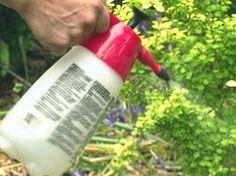 Avoiding Pests and Disease in the Garden : Outdoors : Home & Garden Television