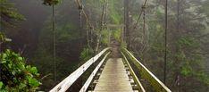 Κολλοειδής Άργυρος: Το Θαύμα κατά του καρκίνου – Ίασις Για ΟΛΟΥΣ West Coast Trail, Vancouver Island, British Columbia, Railroad Tracks, Health And Beauty, Places To Go, Canada, Awesome, Photography