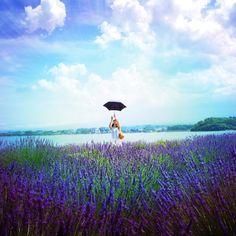 Lavender♡