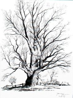 Tree Pencil Art | Downward pathway (pencil)