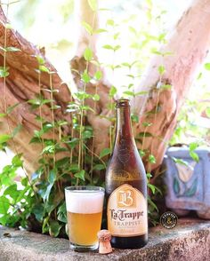 La Trappe Blond - See this Instagram photo by @cervejaecomida