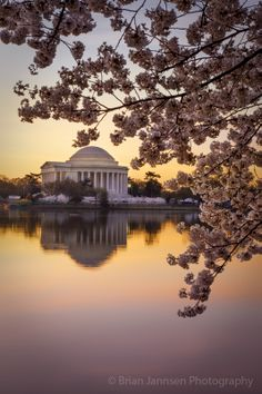 Cherry blossoms and Jefferson Memorial at dawn, Washington DC, USA. © Brian Jannsen Photography