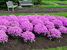 Perennials from Chicagoland Grows : Forever Pink Phlox Front Porch Landscape, Front Yard Landscaping, Sun Plants, Garden Plants, Phlox Flowers, Pink Flowers, Chicago Botanic Garden, Hardy Perennials, Plant Nursery