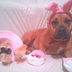 """My Riley Sue hanging out with her peeps this past Easter... Yes,I'm one of """"those"""" people that sends out holiday cards w their pets all dressed up.  Sue was picked up out of a ditch - I adopted her from the dog warden when she was approx 4 weeks old.  Now she's 4:)"""
