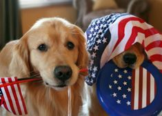 8 Tips To Keep Your Pup Safe This 4th of July