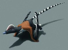 """Pterorhynchus wellnhoferi, a 'rhamphorhynchoid' pterosaur from the Middle Jurassic of China (~164 mya). With a wingspan of around 85cm (33""""), it was probably comparable in size to a modern barn owl. It's known from a nearly complete specimen, with..."""