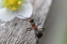 Start Using These Ideas To Tackle Your Property Pest Problem - Pest control resources Ant Bites, Black Ants, Get Rid Of Ants, Flying Ants, Best Pest Control, Dream Meanings, Baking Soda Uses, Garden Guide, Potted Plants