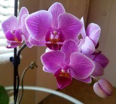 #OrchidExtravaganza hashtag on Twitter