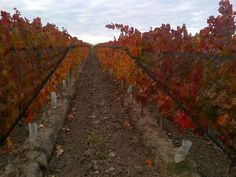 """""""Fall at 'Finca 8' vinyards. Some colors!"""" says agronomist Marcelo Casazza"""