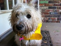 I had so much fun playing in the rain and digging in the mud!