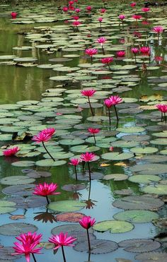 I would so love to have a water lily pond.