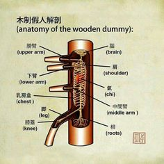 "kungfu-taichi-martialarts: "" Anatomy of the Wing Chun Wooden Dummy "" Wing Chun Martial Arts, Self Defense Martial Arts, Kung Fu Martial Arts, Martial Arts Workout, Chinese Martial Arts, Boxing Workout, Mixed Martial Arts Training, Martial Arts Movies, Martial Arts Styles"