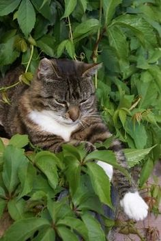 Indoor Plants That Are Safe for Cats - Pets  Plants for cats to eat and enjoy...
