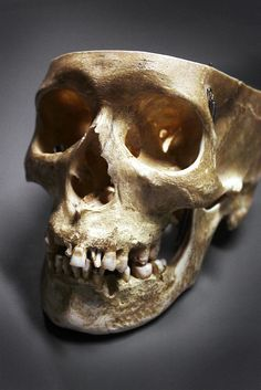 "Skull no. 1 ""nature morte"" by *UffeJakobsen"