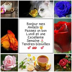 C'est Bon, Messages, Good Morning Friends, Hapy Day, Happy Monday, Welcome, Text Posts, Text Conversations