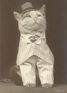 15 Vintage Photos Of Cats That Look Unbelievable - World's largest collection of cat memes and other animals Funny Vintage Photos, Vintage Humor, Crazy Cat Lady, Crazy Cats, Smart Set, Cat Dresses, Cat Hat, Cat Memes, I Love Cats