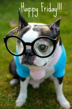 Happy Friday - Pepper and Teddy Xavier Rudd, Happy Week End, Happy Friday, Snoopy, Funny Videos, Pug, Funny Animals, Cute Animals, Boston Terrier Love