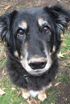Pet Owner(s):Lia Hautamaki Pet: Koby (Collie mix)