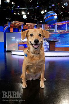 Daily Show dog Aunt Blanche (we love that name!) on the set.