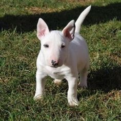 Lovely  #fire #follow #exotic #exclusive #oreo #over #power #popular #kennel #jordan #nba #nice #networking #ufc #ukc #unity #unique #nba #nice #marketing #thick #bullterrier #thebullyplanet