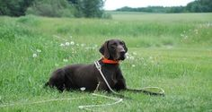 5 Behaviors Your Hunting Dog Ought to Know