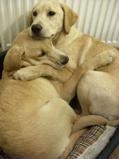 Cute Dogs - this is just precious. #dogs #pets #canine #puppies