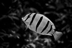 my favorite fishyyy