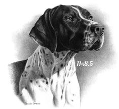 Everything About Enthusiastic German Shorthaired Pointer Puppies Gsp Puppies, Pointer Puppies, Creature Drawings, Animal Drawings, Dog Drawings, Dog Sketches, Western Hunter, Graphite Drawings, German Shorthaired Pointer