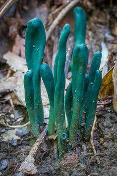 More Amazing Fungi at Sassafras Gully – 9 April 2017 | David Noble Blog