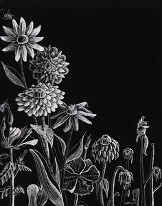 60 Beautiful and Creative Scratchboard Art Examples Drawing Projects, Art Projects, Scratchboard Art, Scratch Art, Paper Artwork, Elements Of Art, Chalkboard Art, Chalk Art, Teaching Art