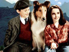 Roddy McDowall, Elizabeth Taylor and Lassie - Lassie Come Home (1943)