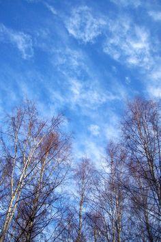 After 18 days of grey skies...#Hammaslahti #Finland, 8th November 2011