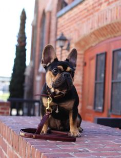 The first thing you'll notice about Hamlet, a 9-month-old French Bulldog, is his distinctive black and tan color scheme. It's a visual calling card that's set Hamlet on his way to becoming a social media star, as fans flock to his Instagram and Facebook accounts to check out his moves. Here's what you need to …