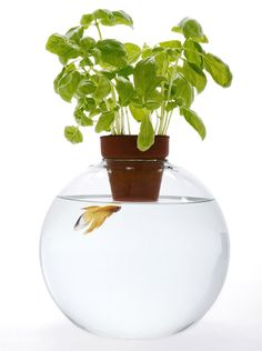 Fish Bowl topped with a plant! Purrfect way to keep the kitties from eating a friend!