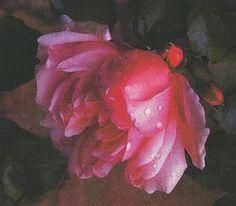 Painting - Pinkrose by Eileen Blair