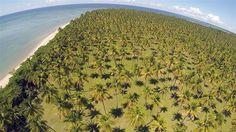 Coconut Farm on Morere' Beach in Bahla, Brazil