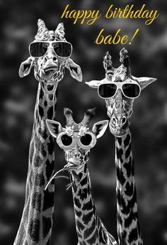 & so cool!& the giraffe on the left. & look at our shades!& says the middle giraffe.& says the giraffe on the right. Typical, he was only talking about himself! Animal Pictures, Funny Pictures, Funny Images, Funny Giraffe Pictures, Quote Pictures, Pictures Images, Family Pictures, Picture Quotes, Funny Animals