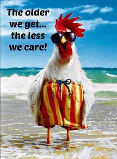 Funny happy birthday wishes animals Ideas Birthday Wishes Funny, Happy Birthday Quotes, Happy Birthday Greetings, Happy Birthday Chicken, Happy Birthday Tattoo, Birthday Humorous, Funny Happy Birthday Pictures, Birthday Sayings, Humor Birthday
