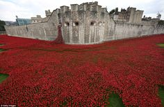 The stunning 'Blood Swept Lands and Seas of Red' ocean of poppies at The Tower of London, England. A symbol of remembrance for those that fell in the war to end all wars.