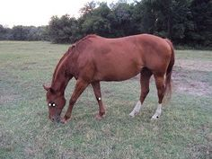 Acupressure and Home Remedies for Eye Problems in Horses   The Naturally Healthy Horse