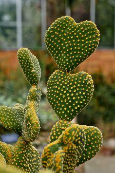 Cactus Heart !