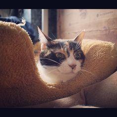 ゆっけ、にやり。#cat - @rivgood- #webstagram
