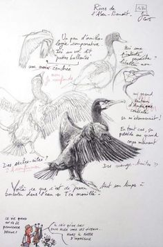 A Britain by the contours / Rives Aber-Benoît Bird Drawings, Art Drawings Sketches, Animal Drawings, Le Wendigo, Bird Sketch, Nature Sketch, Artist Sketchbook, Animal Sketches, Watercolor Bird