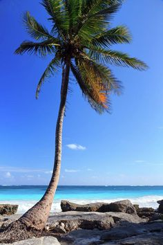 ✮ Single palm tree on beach and sea in background, Tulum, Mexico