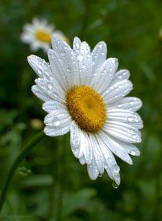 Blumen -n- Such ~ Craig Szymanski - flores - Orchidee Happy Flowers, Pretty Flowers, White Flowers, Little Flowers, My Flower, Flower Art, Exotic Flowers, Amazing Flowers, Sunflowers And Daisies