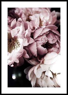 tulips garden care Dreamy Peony Poster Dreamy Peony Poster in the group Posters amp; Prints / Botanical at Desenio AB Gold Poster, Poster Wall, Poster Prints, Garden Care, Rare Flowers, Beautiful Flowers, Photo Pop Art, Groups Poster, Watercolor Flower