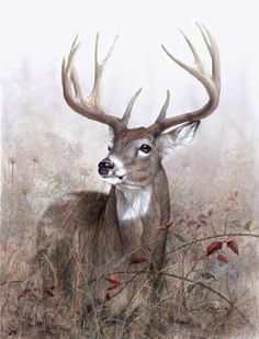 Whitetail art