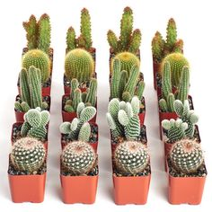 Tips for Growing Thanksgiving, Christmas and Easter Cactus - Garden Lovers Club Cacman and TusGirl We are the cactus family 🌵 spreading Love is Our mission💞 Sharing our story as comics to let you know that true love exists❤️ Elegant Wedding Favors, Wedding Favours, Chic Wedding, Summer Wedding, Wedding Decor, Wedding Ideas, Cacti And Succulents, Planting Succulents, Cactus Plants