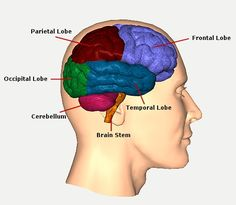 Traumatic Brain Injury Resource Guide - Brain Function